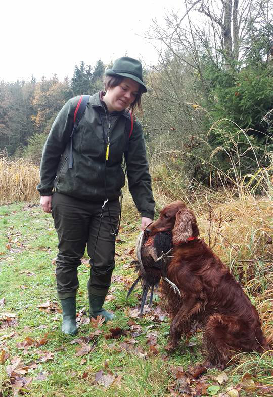 irish red setter - hunting dog