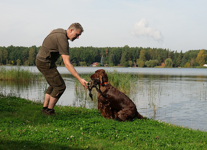 irish red setter hunting tests
